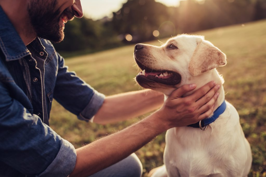 Tennessee man leaves $5 million to dog in his will