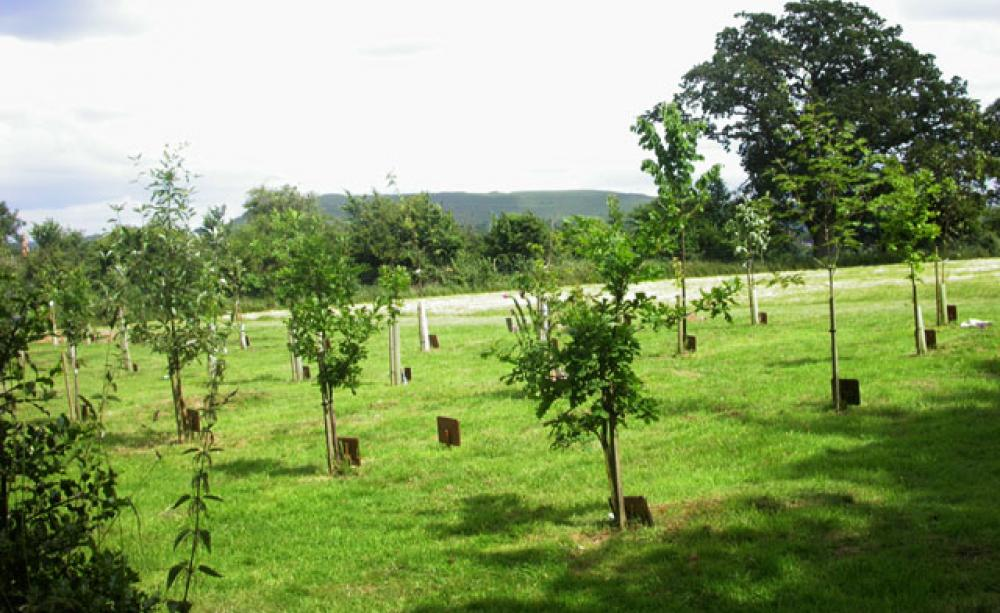 natural burial - the hayes law firm