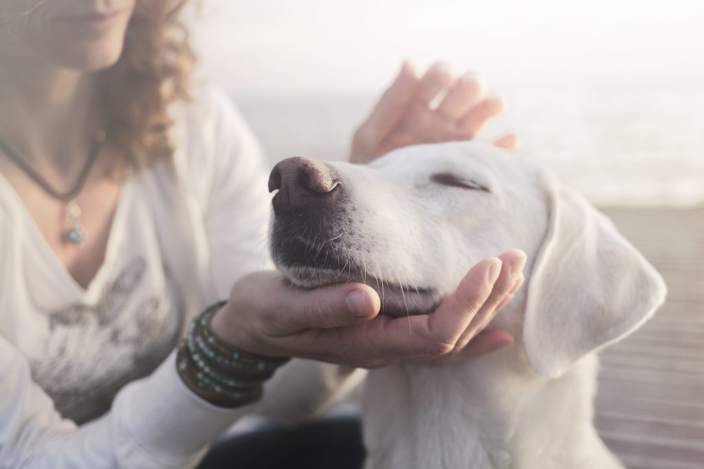 What's Next for Pet Death Care?
